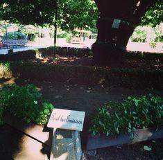 Eminescu's Linden Tree. #nature #linden #poet #romanianpoet #romania #tree Poet, Romania, Language, Culture, Languages, Language Arts