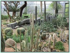 Cactus Garden   Brooklyn NY - not what you would expect on the East Coast, huh?