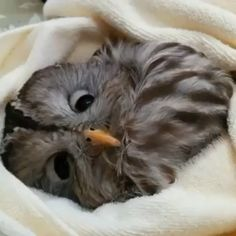 Smiling Animals, Cute Baby Animals, Animals And Pets, Funny Animals, Funny Owls, Funny Birds, Funny Animal Photos, Cute Animal Videos, Beautiful Owl