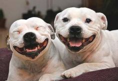 Don't you just love a great smile?