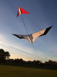 A designer kite named the Pfiel-ente. A canard or tail-first design. It looks like quite a nice light-wind flier - I'll bet those are carbon tube spars... T.P. (my-best-kite.com).
