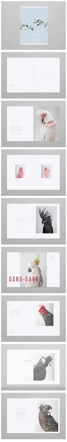 "Birds on Behance ""i like how they have set out the photographs, i would like to do sonething abit like this"""