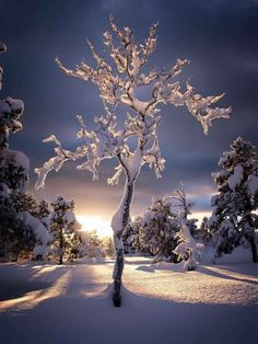 I Love Winter, Winter Snow, Winter Pictures, Nature Pictures, Winter Photography, Nature Photography, Cute Christmas Wallpaper, Winter Magic, Winter's Tale
