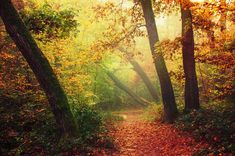 """Colorful foggy autumn forest photo print - bedroom wall art - """"If These Trees Could Talk XCIII."""" by Zsolt Zsigmond (realityDream) - SKU0056"""