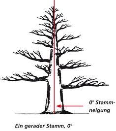 Gerader Stamm, 0° Neigung Bonsai Pruning, Bonsai Styles, Plantas Bonsai, Wire Tree Sculpture, Bonsai Art, Ikebana, Shrubs, Sketches, Landscape
