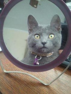 My Russian Blue cat!