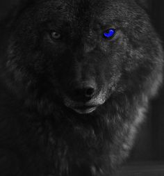 Black Wolf With Blue Eyes Wallpaper | imgbucket.com - bucket list ...