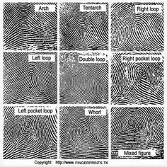 Pic of fingerprint patterns and classifications   Parties Plus ...