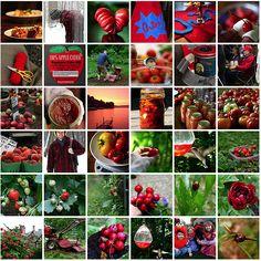 fruits, veggies and more...