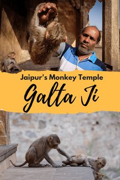 Galta Ji, also known as the 'monkey temple' due to the presence of hundreds of macaques, is a hindu temple and tourist attraction on the edge of Jaipur in Rajasthan, India. China Travel, India Travel, Japan Travel, Jaisalmer, Jodhpur, Best Places To Travel, Cool Places To Visit, Temple India, Jewish Temple