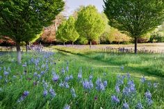 Fit for a prince: a wild-flower meadow at Highgrove