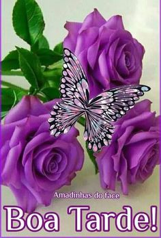 Butterfly Wallpaper, Rose, Floral, Flowers, Portuguese, Glitter, Videos, Good Evening Sms, Good Morning Beautiful Images