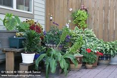 Garden in containers :)