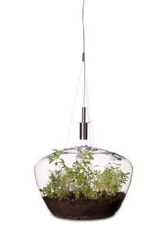The Glasshouse Lamp – Krstyna Pojerova