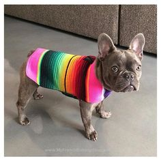 . ▼▼▼ Like This Post? Then Show Some Love And Tag Your Frenchie Loving Friends! ▼▼▼ . After you have done that make sure to follow us for more awesome posts like this. Also make sure to check out our shop at www.MyFrenchBulldogShop.com if you want to pick up some awesome French Bulldog merchandise :) #frenchie #instafrenchie #frenchies #frenchiesofinstagram #frenchielove #fitfrenchies #frenchieoftheday #frenchiegram #ilovemyfrenchie #thefrenchiepost #fab_frenchies #frenchielife #.. French Bulldog Tattoo, French Bulldog Art, French Bulldog Puppies, French Bulldogs, Animals And Pets, Baby Animals, Cute Animals, Teacup Bulldog, Cutest Dog Ever