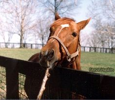 secretariat horse | And, finally, I was fortunate enough to catch Secretariat looking like ...