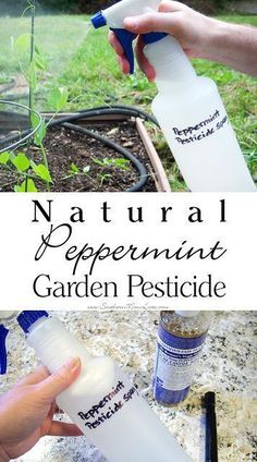 Natural Peppermint Garden Pesticide Spray
