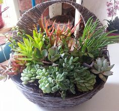 Nice succulent arrangement. Photo by Kari Murphy