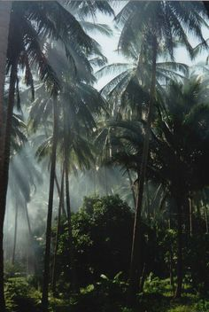 / Rainforrest; one of the most beautiful things in the world