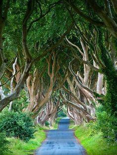 The Dark Hedges, Northern Ireland. #travel