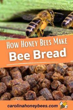 Honey Bee Pollen, Honey Bees, Bee Farm, Backyard Beekeeping, Bees Knees, Bee Keeping, Health And Nutrition, Homesteading, Bee Products