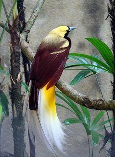Bird of Paradise - Bali - Pixdaus