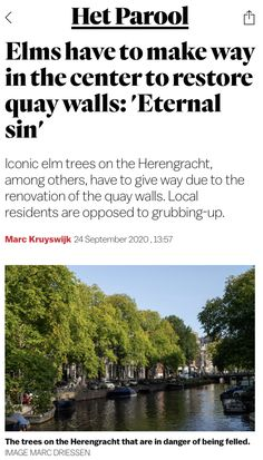 Elm Tree, 24 September, Make Way, Amsterdam, Restoration, News