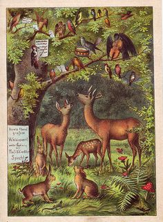 A delightful and charming vintage woodland illustration... (art, deer, forest, German children's book )