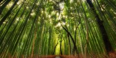 BEAUTIFULLY BIZARRE PLACES AROUND THE WORLD Part - VIII Bamboo Forest, Japan