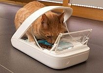 The Sureflap Feeder ensures that only that specific pet can eat from that dish!  No more stealing each other's food!