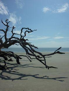 Driftwood Beach (Jekyll Island, Georgia)