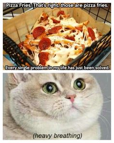 Pizza fries. Heavy breathing cat
