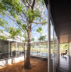 thai house by sook architects is constructed around a native tree