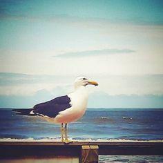 Ao mar - Itanhaém #praia #céu