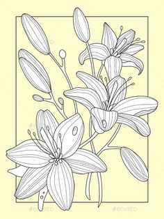 Illustration about Lily flowers coloring book vector illustration. Anti-stress coloring for adult. Black and white lines. Illustration of lily, ornamental, line - 85045145 Printable Flower Coloring Pages, Adult Coloring Book Pages, Coloring Books, Stitch Tattoo, Flower Sketches, Pattern Illustration, Illustration Fashion, Tattoo Stencils, Floral Illustrations
