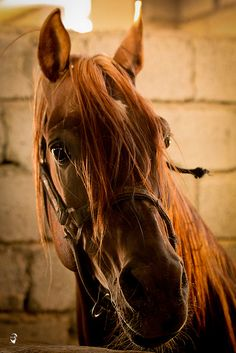 beauty  by Mustafa Khayat, via Flickr