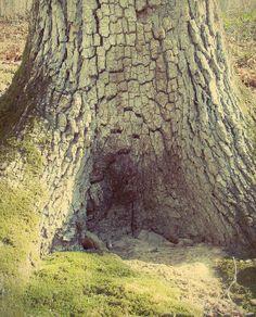 small tree trunk alcove
