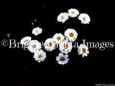 "2015 Color: Little white flowers Order #20150716046 Wasaga Beach, Ontario. Available in  5""x7"" CAD $20.00 8""x10"" CAD $35.00 11""x14"" CAD $45.00 16""x20"" CAD $75.00 24""x36"" CAD $95.00 FREE SHIPPING Payment by https://www.paypal.me/BGiunta or email transfer brigittegiuntaimages@gmail.com email me or pm me to order. I can also send you an invoice from my paypal which can be paid by credit card. Check out this magazine online. It features some of my photos Pages 24-25, 92-93, 232-233, 238-239 and…"