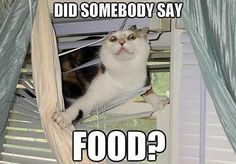 Food? Where!? <--- MY LIFE.