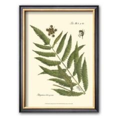 "Art.com ""Small Antique Fern II"" Framed Art Print"