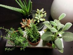 plants interiors