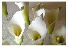 Sugar Callas, 3/4 View by Superfine Bakery, via Flickr
