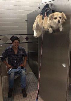 BathroomStallDog