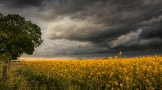 field storm wallpaper download hd collection