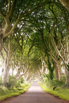 Dabble in magic on Bregagh Road in Ballymoney, Ireland. | 10 Streets That Will Actually Warp You Into A Different Place