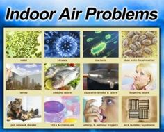 Bedroom Air Quality: What Are You Breathing When You Sleep? Sick Building Syndrome, Sinus Allergies, Get Rid Of Mold, Employee Wellness, Thing 1, Air Pollution, Indoor Air Quality, Air Purifier, Infographic