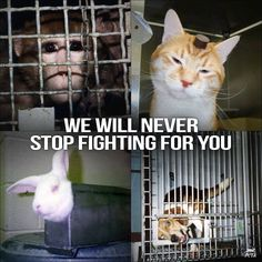 Come on guys! This is ridiculous! There's no need for animal testing. Get with the times.