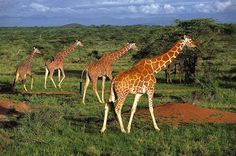 Amboseli National Park, Kenya   Amboseli National Park, Kenya   Flickr - Photo Sharing!