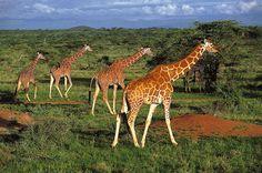 Amboseli National Park, Kenya | Amboseli National Park, Kenya | Flickr - Photo Sharing!