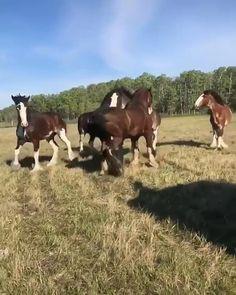Funny Horse Videos, Funny Horses, Funny Animal Videos, Cute Funny Animals, Cute Baby Animals, Big Horses, Cute Horses, Pretty Horses, Beautiful Horses
